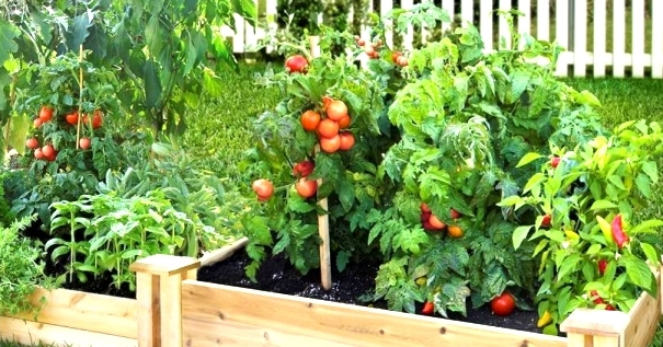 Grow your own veggies: Nice and Easy